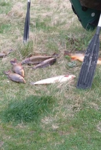 На Хмельниччині незаконно виловлено риби на майже 17 тисяч гривень, фото-3