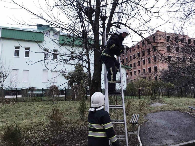"""Операція """"Котик-муркотик"""", фото-2, Фото: """"Служба порятунку 101 Кам'янець-Подільський"""""""