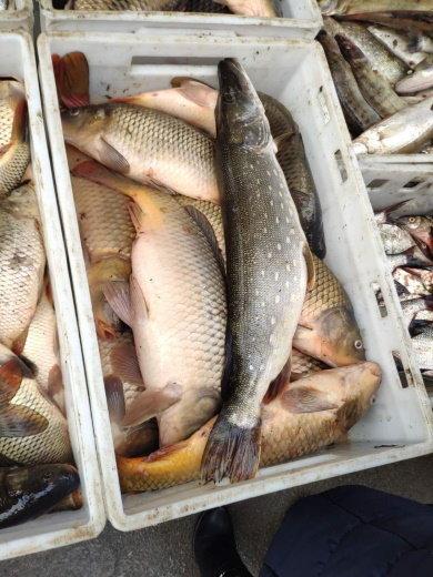 Упродовж одного дня рибпатрульні Хмельничинни виявили 5 порушень, фото-2, Фото: прес-служба Хмельницького рибоохоронного патруля