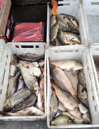Під час рибоохоронних рейдів у Кам'янці-Подільському виявлено незаконний товар, фото-2, Фото: прес-служба Хмельницького рибоохоронного патруля