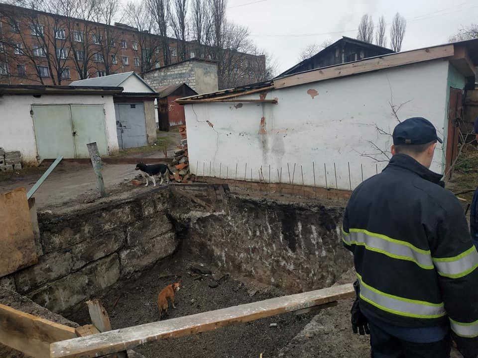 """У Кам'янці-Подільському собаки потрапили у """"полон"""", фото-1"""