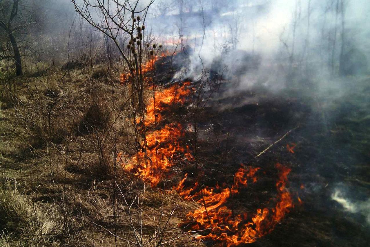 Рятувальники приборкали пожежу у селі Колибаївка, фото-2, Фото: ГУ ДСНС України у Хмельницькій області