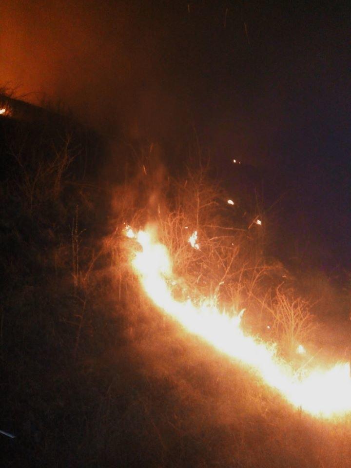 """Під час горіння сухостою на Кам'янеччині з вогню врятували маленьких жителів, фото-2, Фото: """"Служба порятунку 101 Кам'янець-Подільський"""""""