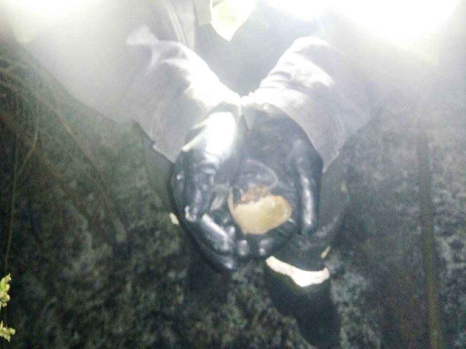 """Під час горіння сухостою на Кам'янеччині з вогню врятували маленьких жителів, фото-1, Фото: """"Служба порятунку 101 Кам'янець-Подільський"""""""