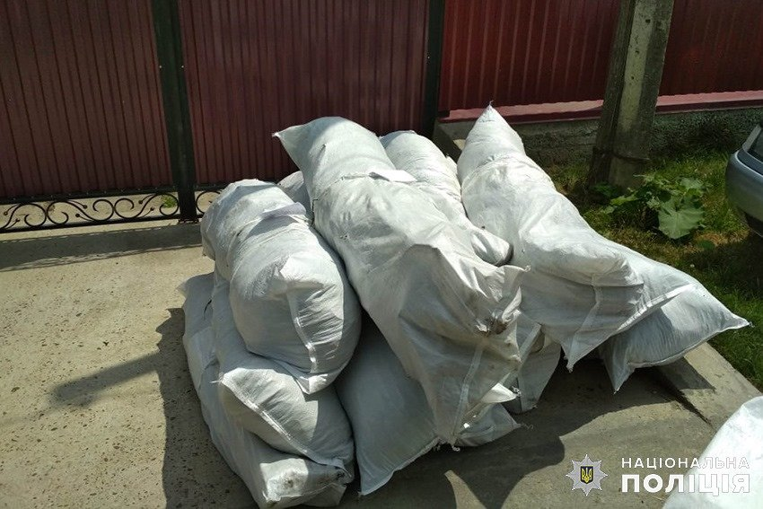 На Кам'янеччині у 61-річної пенсіонерки вилучили майже 100 кущів конопель, фото-2