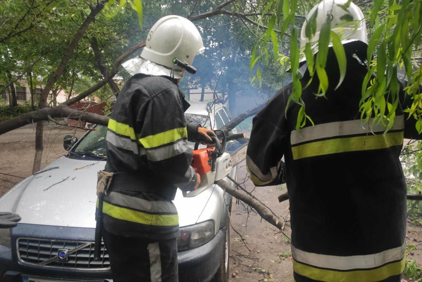"""У Кам'янці-Подільському на автомобіль впало дерево, фото-1, Фото: """"Служба порятунку 101 Кам'янець-Подільський"""""""