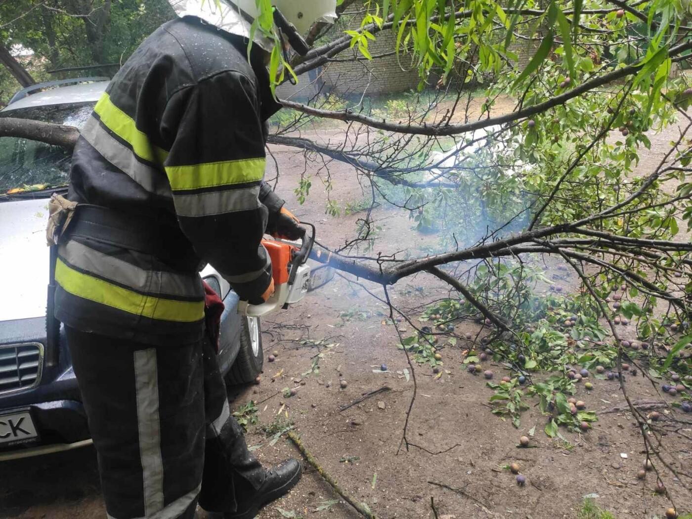 """У Кам'янці-Подільському на автомобіль впало дерево, фото-2, Фото: """"Служба порятунку 101 Кам'янець-Подільський"""""""