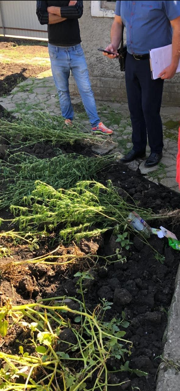 У кам'янчанина на території домоволодіння виявили нарковмісні рослини, фото-1, Фото: Кам'янець-Подільський відділ поліції