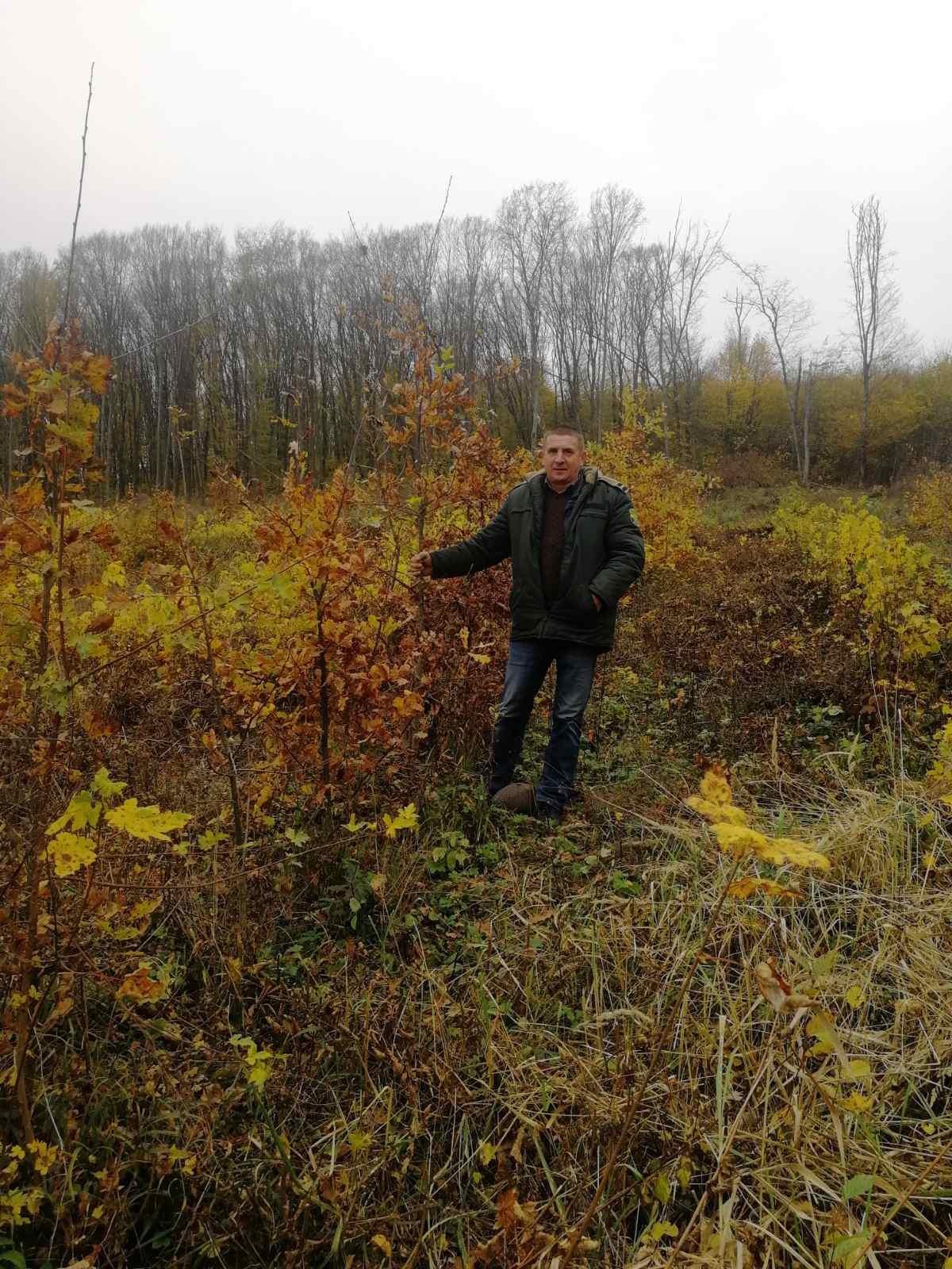 Вартові зелених шат створили 47,4 гектара лісових культур, Фото: Кам'янець-Подільський лісгосп