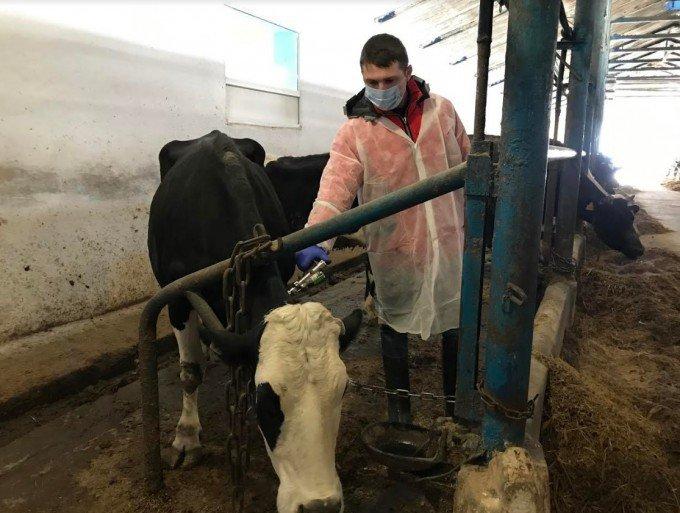 У Кам'янець-Подільському районі перевіряють худобу на туберкульоз, фото-2, Фото: ГУ Держпродспоживслужби в Хмельницькій області