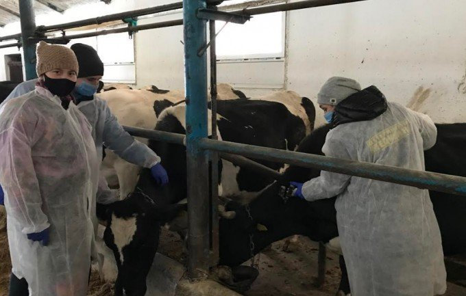 У Кам'янець-Подільському районі перевіряють худобу на туберкульоз, фото-1, Фото: ГУ Держпродспоживслужби в Хмельницькій області