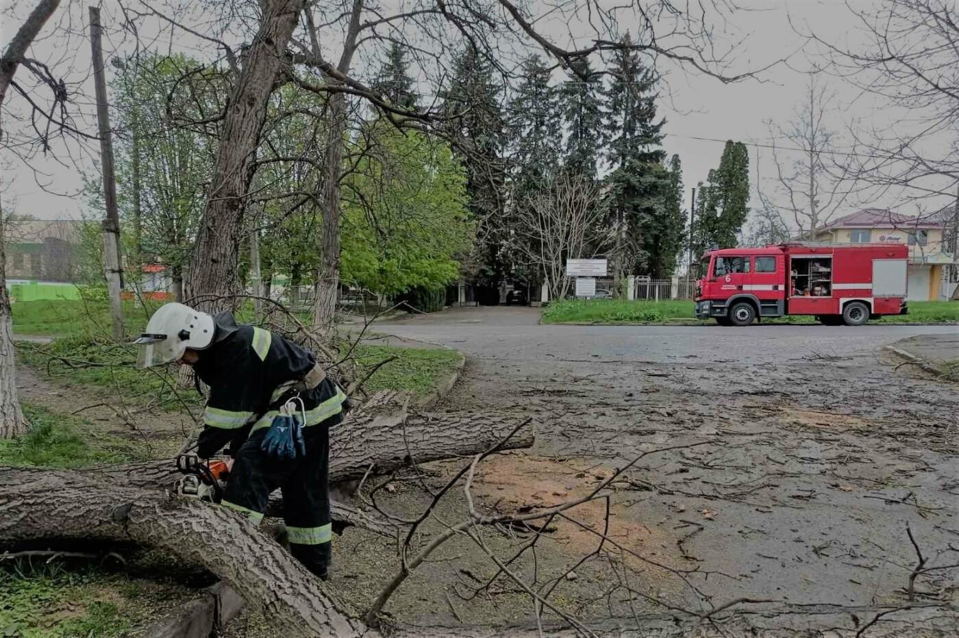 """У Кам'янці-Подільському дерево перекрило рух транспорту, фото-1, Фото: """"Служба порятунку 101 Кам'янець-Подільський"""""""