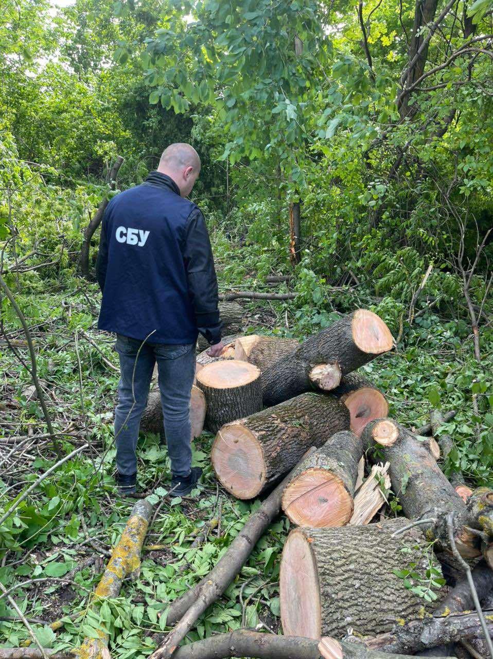 Правоохоронці задокументували незаконну вирубку лісу на території Кам'янець-Подільського району, фото-1, Фото: СБУ