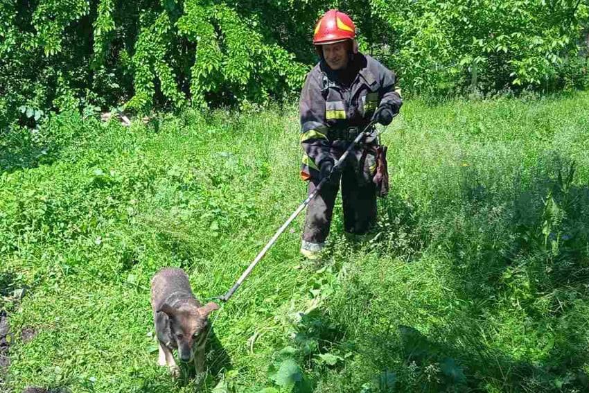 По Нігинському шосе рятували собак, які впали в яму, фото-1