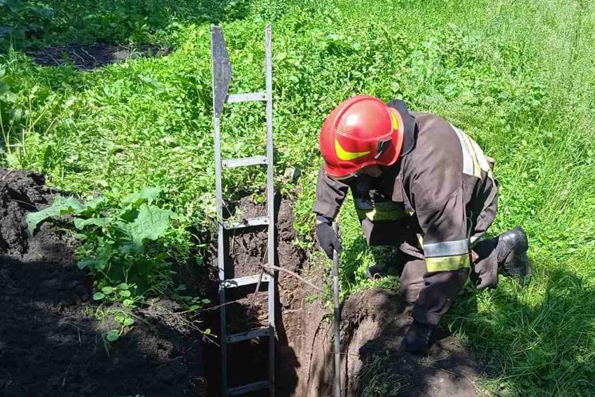 По Нігинському шосе рятували собак, які впали в яму, фото-2