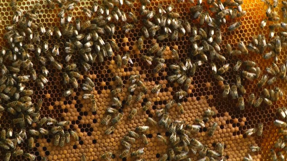 """Бджолярі Хмельниччини заявили про масову загибель бджіл, фото-1, Фото: пресслужба """"Суспільного"""""""