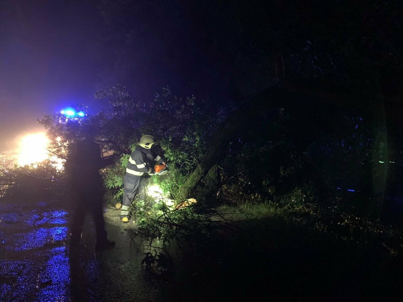 На Кам'янеччині на проїджу частину дороги впало дерево , фото-1, Фото: пресслужба порятунку 101 Кам'янця-Подільського