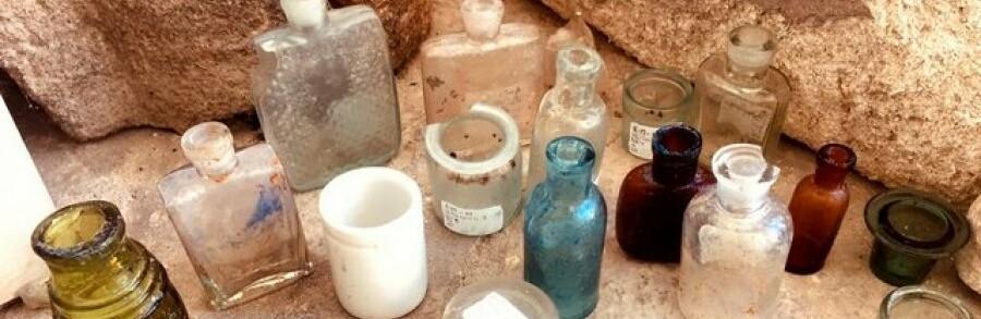 Природный феномен: в Мелитополе в августе зацвела сирень